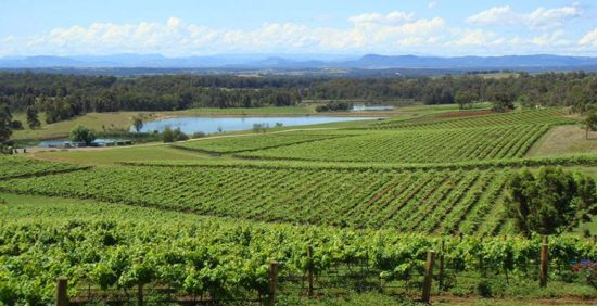 Hilltop view over the vineyards on our Hunter Valley private wine tours