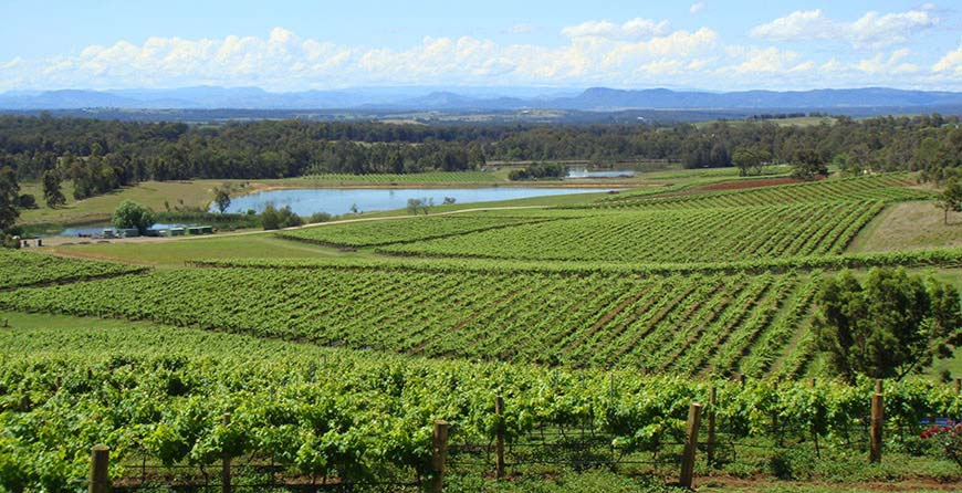 View over the vineyards on our Hunter Valley private wine tours