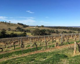Hunter Valley Wine Show 2016